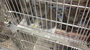 Kittens in a portalized cage