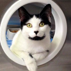 black and white cat peeking through a portal